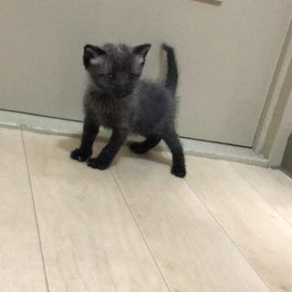 産まれて約1ヶ月の子猫♀です。