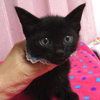 なれなれ黒子猫☆ピノくん 2ヵ月弱