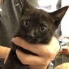 黒猫の男の子「ヤマトくん」を助けて下さい!