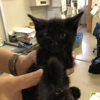 黒猫の男の子「ジジくん」を助けて下さい!