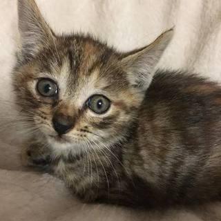 野良猫の飼育放棄、4姉妹で保護されました!