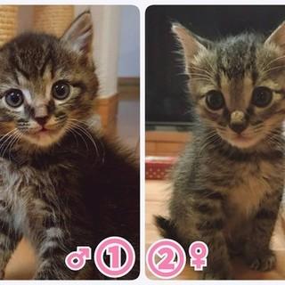 動物管理センター引き出し 仲良し双子猫