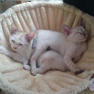 生後3ヶ月の3兄妹の子猫さん☆