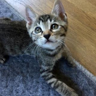 肩乗り子猫のスミレちゃん…2ヶ月
