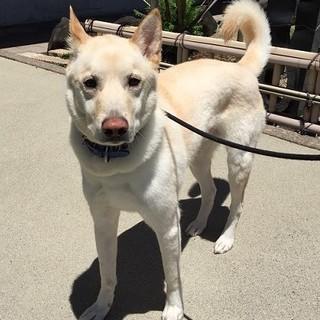 大人しい日本犬系ミックス♂中型犬3歳