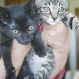 24日譲渡会参加、猫白血病陽性の2兄妹に愛を〜