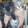 猫白血病キャリアの2兄妹に、幸せを探しています!