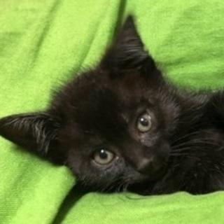 黒猫三兄弟(♂♀)