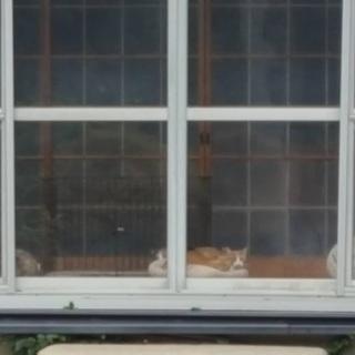 多頭飼育崩壊の猫たちに救いを!