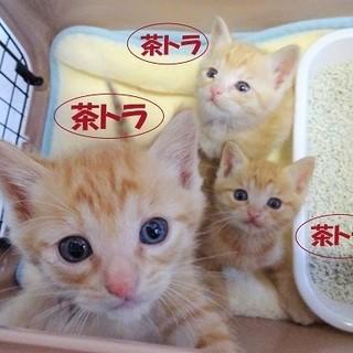 ☆ちゃ茶チャ兄弟☆