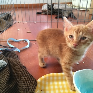 「2階組」 子猫4匹兄弟猫 約生後二カ月半