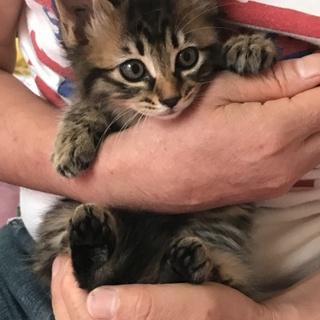 野良猫の赤ちゃん 2ヶ月