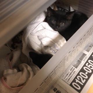 野良猫の5匹の子猫の里親募集です。
