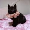 2か月の黒猫●りんかちゃん