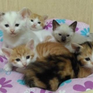 6/24(日)子猫だらけの譲渡会に参加します!