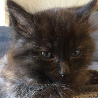 イケメン❤️ふわふわの黒猫君の家族を探しています。