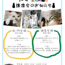 ねこけん譲渡会★虎ノ門会場
