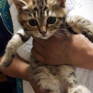 6月24日譲渡会参加!かわいい丸顔子猫♪