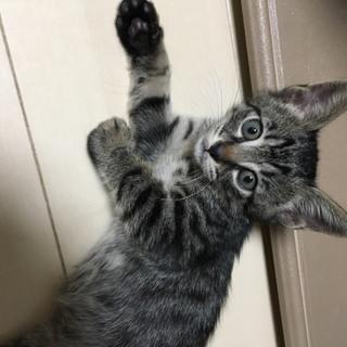 子猫 男の子