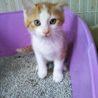 ふわもこ、愛くるしい子猫3