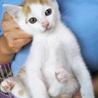 ふわもこ、愛くるしい子猫2