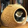 猫ちぐらを買う