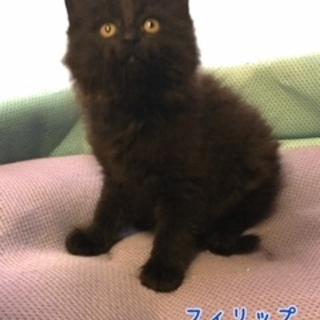 毛足が長い素敵な子猫