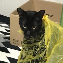 地震~猫たちは?~