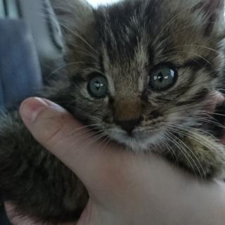 子猫の里親探してます!!