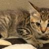 現在センターには22匹の子猫が収容されております。
