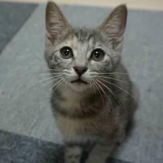 美猫♪ティティ♪ 2ヶ月半