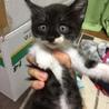 子猫を保護しています。生後1ヶ月くらいです!