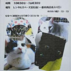 7/1(日)本八幡駅前 北口 一番街入口  譲渡会