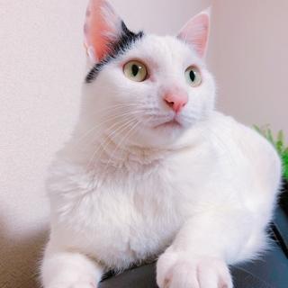 人懐っこい猫さんです!ゆきちゃん♂