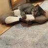 猫白血病(FeLV) 未発症の場合の対応について