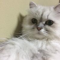 ティアラ(ティーちゃん)