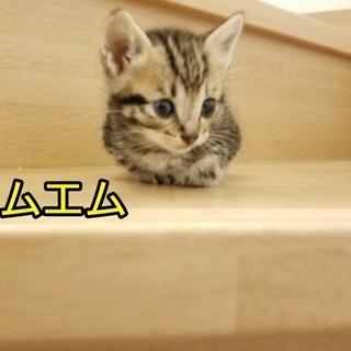 小柄な子猫 かわいい三兄弟です