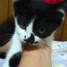 妹キャラ甘えん坊のかわいいめす白黒あいり  サムネイル3