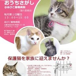 第4回☆ねこのおうちさがし(猫の譲渡会))