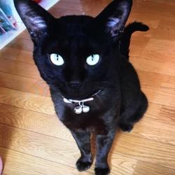 黒猫を怪我をしていたので保護したのですが…
