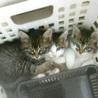 保護猫3兄妹