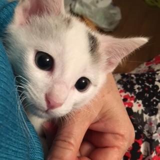 ふつーの日本猫の桃ちゃん