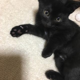 生後2ヶ月オス黒猫ちゃん