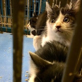 子猫6匹が収容の恐ろしさに耐えています