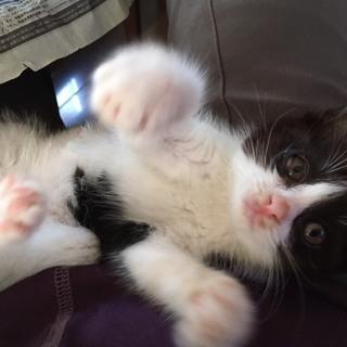 可愛い慣れ慣れ抱っこ好き猫ちゃん