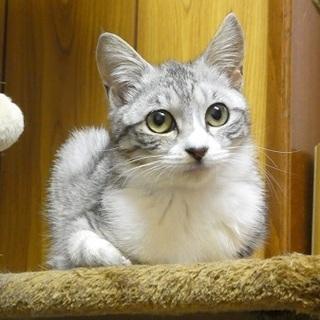ゆめ、美猫になって里親さん募集中