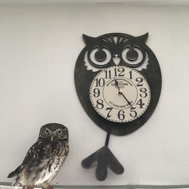 フクロウ時計とフクロウ