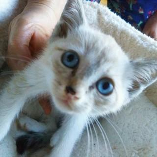 ブルーの瞳の男の子