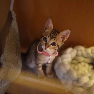 子猫のリス美