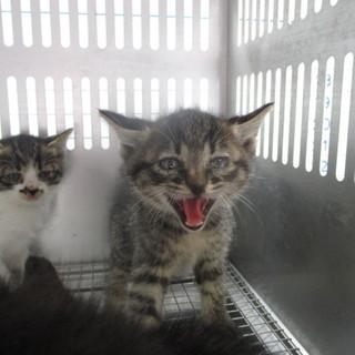 猫風邪を患っている兄弟が明日、収容期限迎えます。